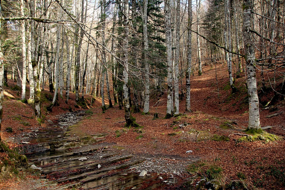 bosco-funghi-autunno