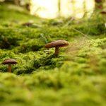 funghi montagna