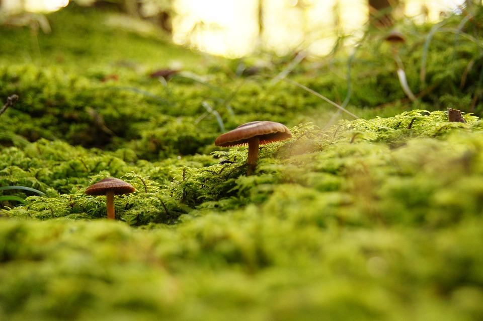 Come cercare funghi in sicurezza: consigli pratici