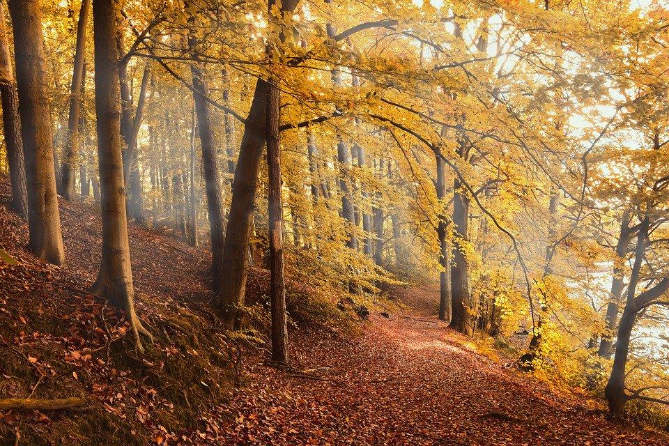 Foliage: 10 itinerari più belli d'Italia da fare in autunno