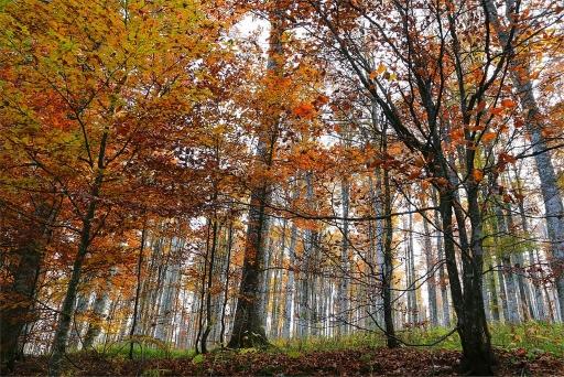 bosco cansiglio
