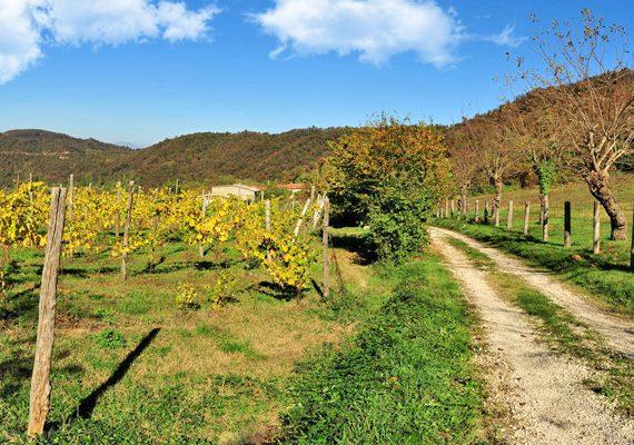 sentiero monti di meledo