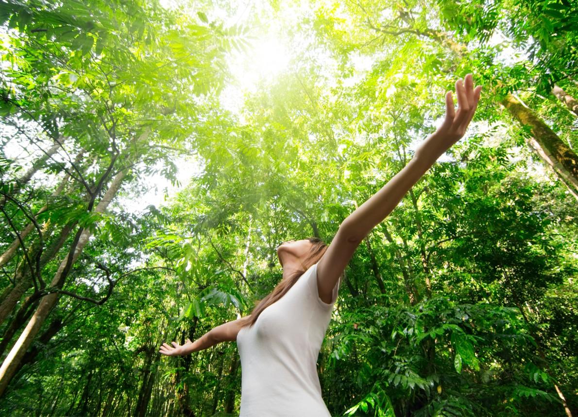 Terapia forestale: tutti i benefici e i vantaggi per la salute