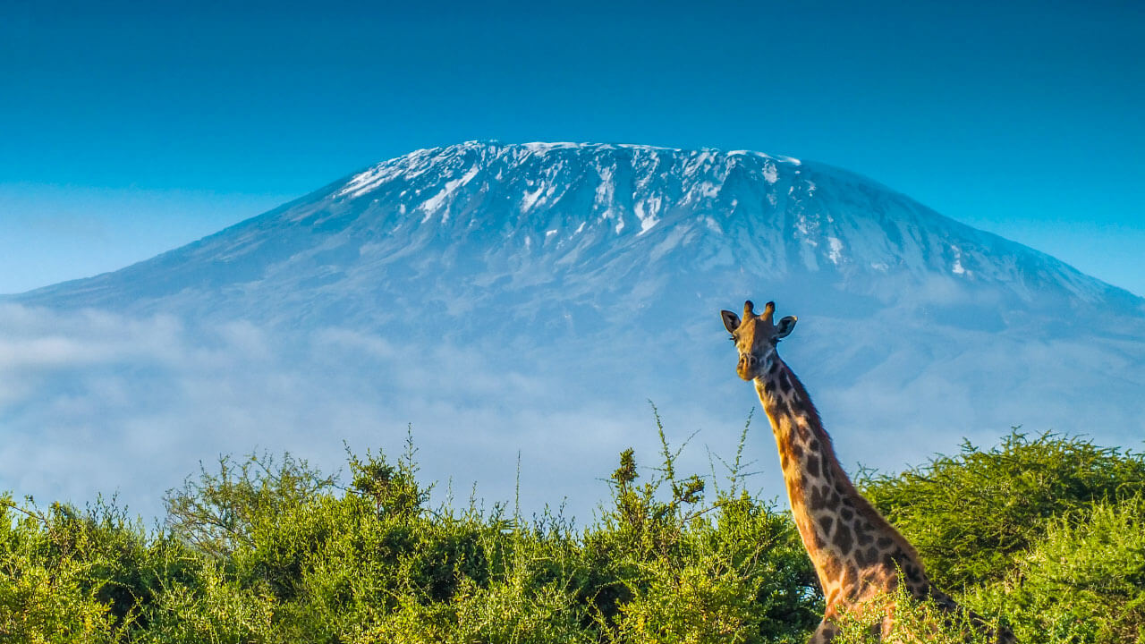 Trekking sul kilimajaro e Safari in Tanzania