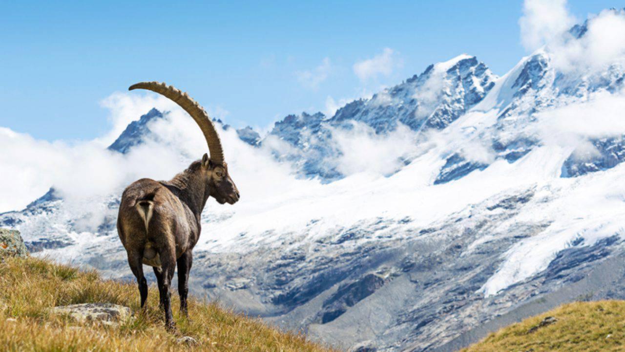 Trekking nel parco nazionale del Gran Paradiso7 min read